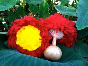 'Uli'uli---Feather-Gourd-Rattles