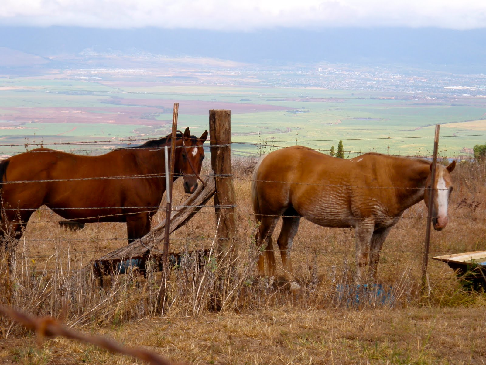 お隣さんのお馬さんもコチラの畑をチェック